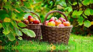 abondance pommes