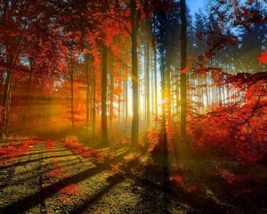 couleurs_foret_rayons_soleil_0