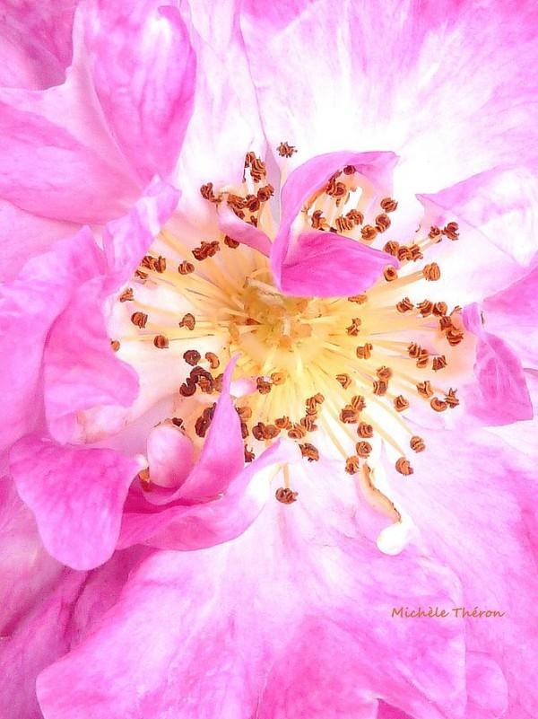 rose michèle theron