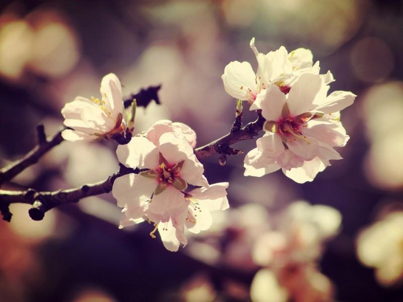 spring-1256163_1280