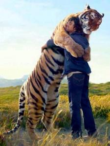 calin tigre