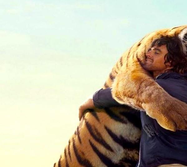 calin tigre large