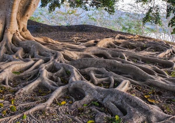 racines 2