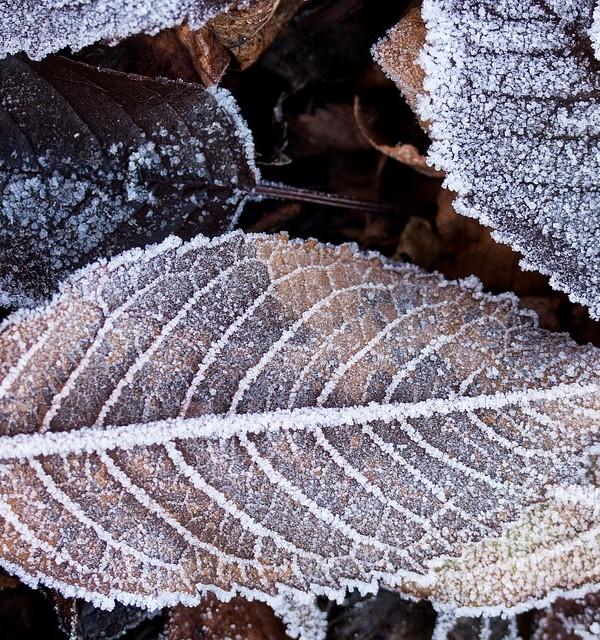 winter-223423_960_720